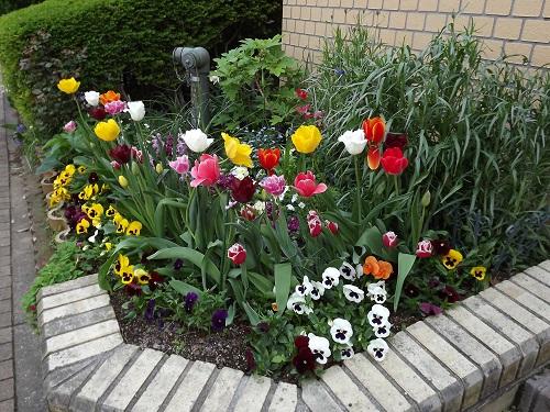 DSCF1930 my garden
