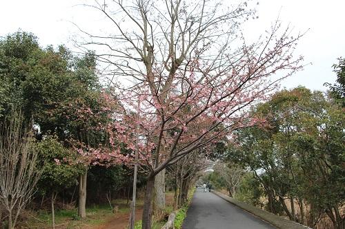IMG_13825buzaki.jpg