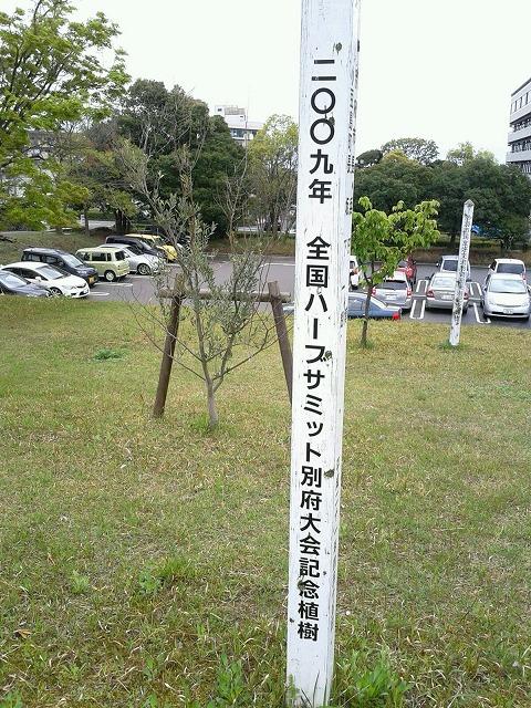 DSC_02477.jpg