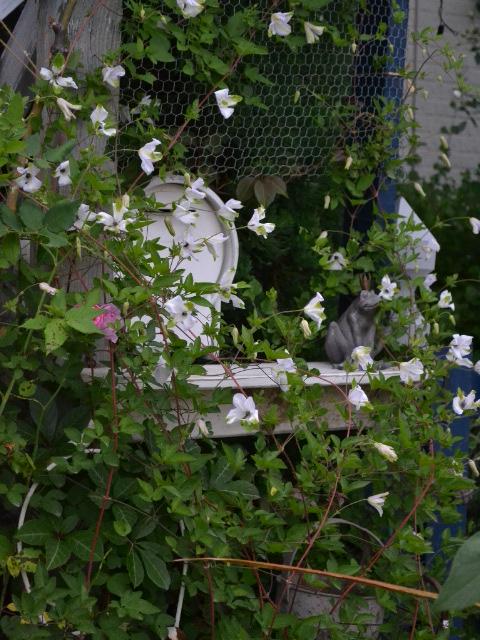クレマチス ガーデンゲート