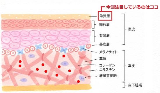 セラミド角質層浸透