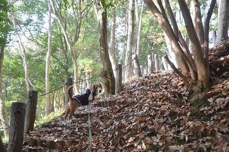 20141224赤坂公園06