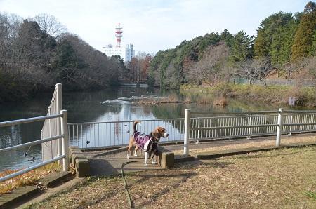 20141224赤坂公園05