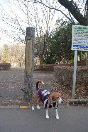 20141224赤坂公園02