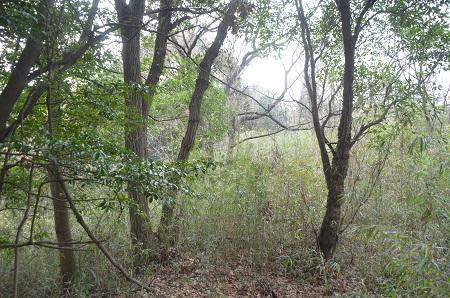 20141224三峯山砦跡06