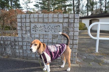 20141224赤坂公園01
