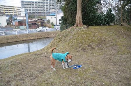 20141228佐倉城址公園05
