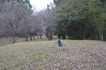 20141228佐倉城址公園08