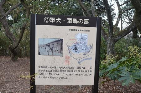 20141228佐倉城址公園14