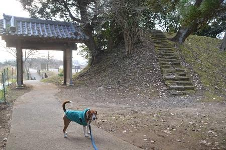 20141228佐倉城址公園22