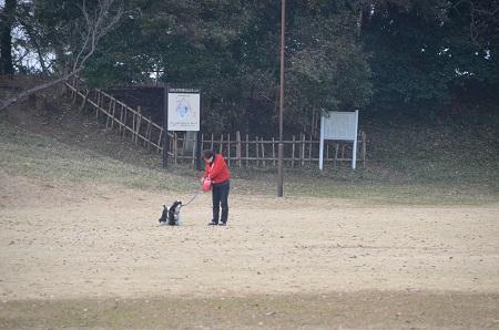 20141228佐倉城址公園29