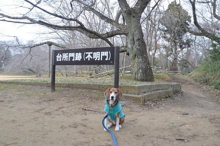 20141228佐倉城址公園27