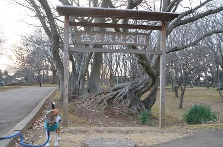 20141228佐倉城址公園35