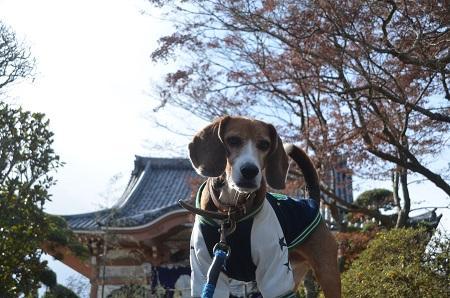 20150101浜の七福神 観明寺16
