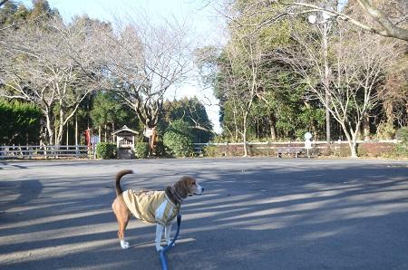 20150108しもふさ七福神 成田ゆめ牧場06