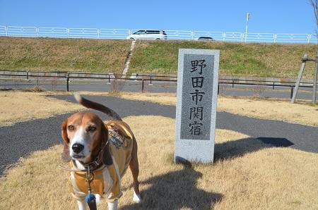 20150108 下総利根宝船公園07