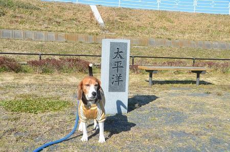 20150108 下総利根宝船公園21