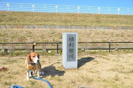 20150108 下総利根宝船公園19