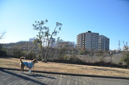 20150122南山公園05