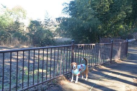 20150122南山公園13