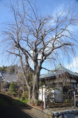 20150127八千代八福神 妙徳寺07