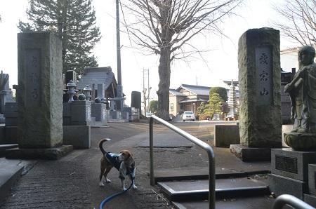 20150127八千代八福神 貞福寺12