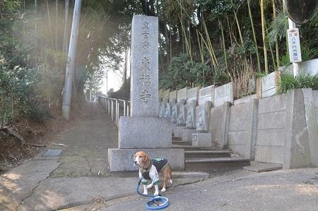 20150127八千代八福神 貞福寺13