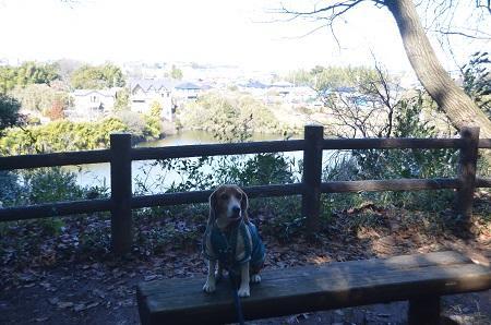 20150131古利根光公園観察の森05