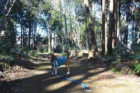 20150131古利根光公園観察の森02