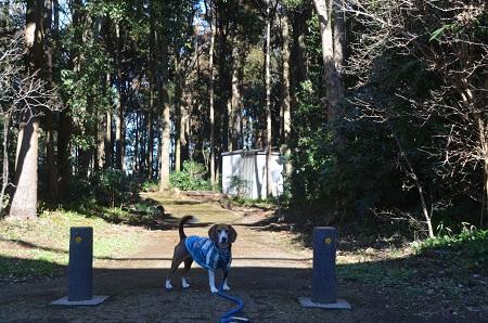 20150131古利根光公園観察の森01