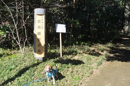 20150131古利根光公園観察の森10