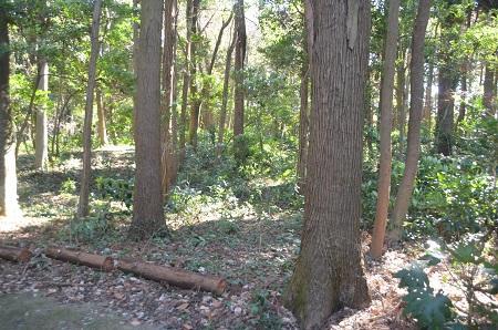 20150131古利根光公園観察の森07