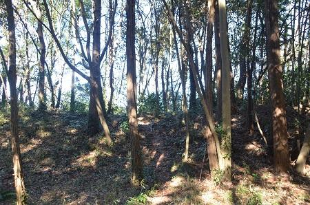 20150131古利根光公園観察の森16