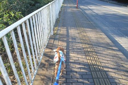 20150203今日の散歩 なよ竹小路04