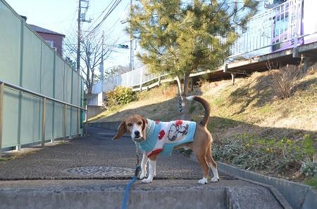 20150203今日の散歩 なよ竹小路02