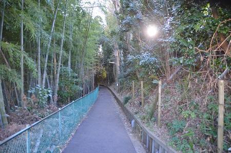 20150203今日の散歩 なよ竹小路12
