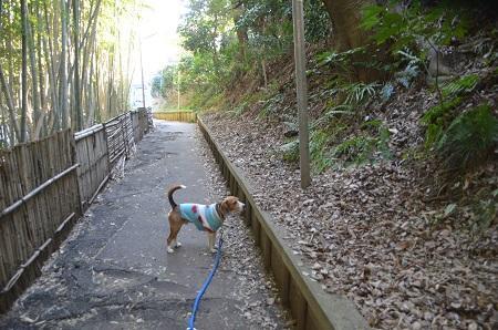 20150203今日の散歩 なよ竹小路13
