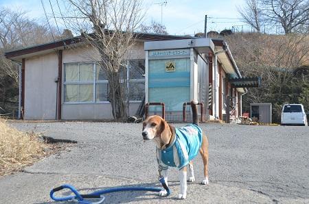 20150211旧・手賀小学校跡10