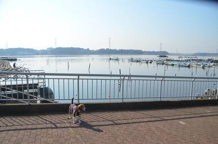 20150212手賀沼公園06