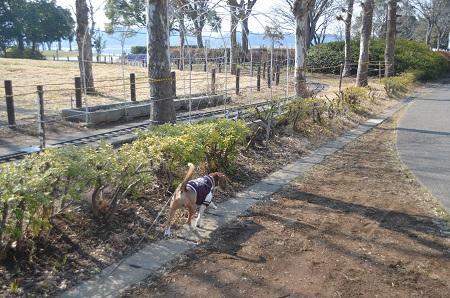 20150212手賀沼公園01