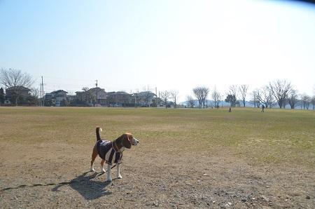 20150212手賀沼公園18