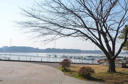 20150212手賀沼公園15