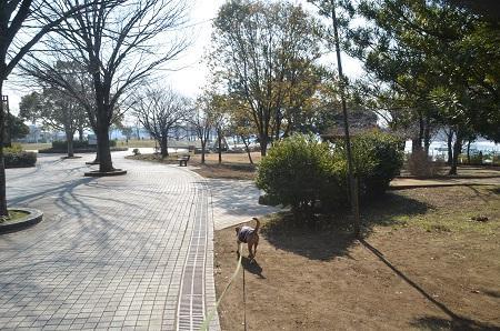 20150212手賀沼公園13