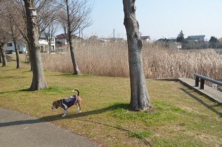 20150212手賀沼公園23