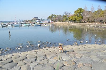 20150212手賀沼公園22