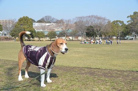 20150212手賀沼公園35