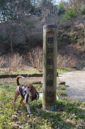 20150212船戸根戸緑地01