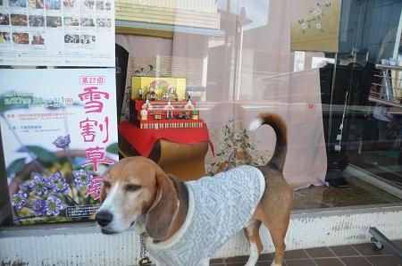 20150216城下町佐倉ひなめぐり15