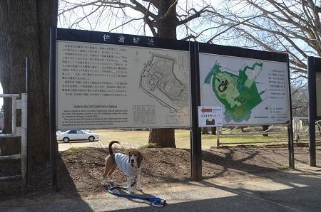 20150216佐倉城址公園04