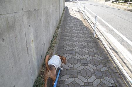 20150216佐倉城址公園01